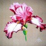 iris-fushia-am-150x150 acrylique dans Faune et Flore